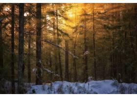 地球,森林,冬天的,阳光,树,雪,太阳,日落,壁纸,图片