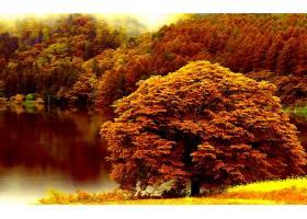 地球,湖,湖,秋天,森林,树,叶子,壁纸,图片
