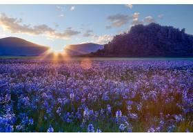 地球,花,花,领域,阳光,风景,自然,山,紫色,花,壁纸,图片