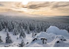 地球,冬天的,自然,风景,雪,森林,壁纸,图片
