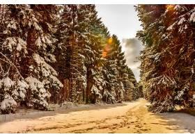 地球,冬天的,路,雪,树,壁纸,(2)图片