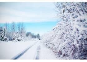 地球,冬天的,路,雪,树,壁纸,(5)图片