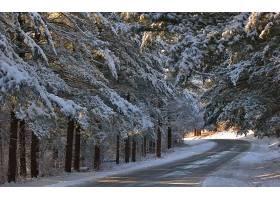 地球,冬天的,路,雪,树,壁纸,图片