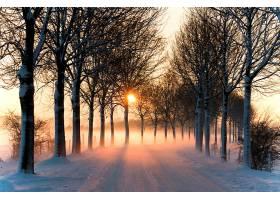 地球,冬天的,路,雪,树,太阳,日落,绿树成荫,壁纸,图片
