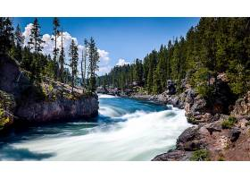 地球,河,自然,树,森林,壁纸,图片