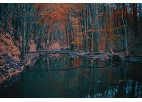 地球,河,自然,森林,树,反射,秋天,壁纸,图片