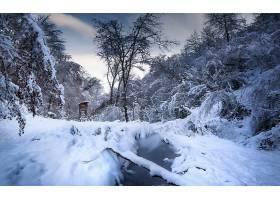 地球,冬天的,自然,雪,溪流,森林,壁纸,图片
