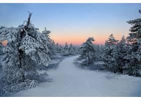 地球,冬天的,雪,小路,自然,树,森林,日落,天空,壁纸,图片