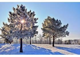 地球,冬天的,雪,树,阳光,壁纸,图片