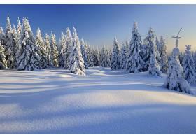 地球,冬天的,雪,自然,森林,壁纸,图片