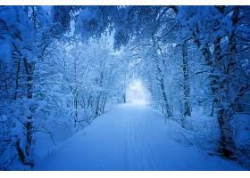 地球,冬天的,雪,路,树,壁纸,图片