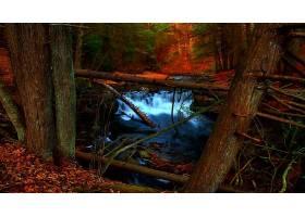 地球,瀑布,瀑布,小溪,溪流,秋天,叶子,树,森林,壁纸,图片