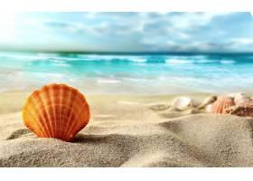 地球,壳,自然,沙,地平线,海洋,壁纸,