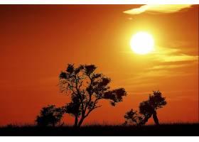 地球,日出,自然,太阳,橙色的,树,壁纸,图片