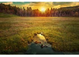 地球,日出,自然,鸭肉,草,森林,壁纸,图片