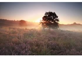 地球,日出,花,雾,自然,树,阳光,壁纸,图片