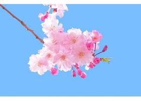 地球,花,花,树枝,花,天空,粉红色,花,壁纸,图片