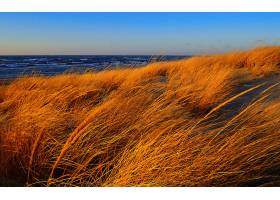 地球,海滩,自然,草,海洋,沙,地平线,壁纸,