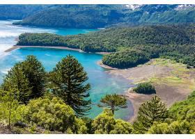 地球,风景,自然,树,森林,湖,壁纸,图片