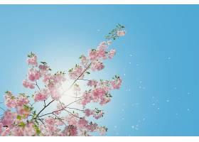 地球,花,花,花,花瓣,阳光,天空,粉红色,花,弹簧,树枝,壁纸,图片
