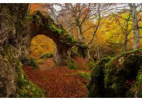 地球,拱门,自然,岩石,苔藓,秋天,森林,壁纸,图片