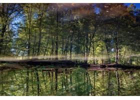 地球,反射,树,自然,森林,壁纸,图片