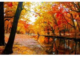 地球,河,公园,秋天,叶子,树,森林,壁纸,图片