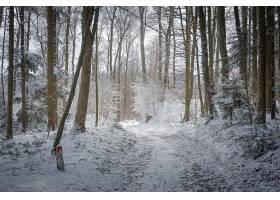 地球,冬天的,森林,树,壁纸,图片