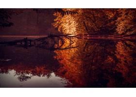 地球,反射,自然,树,秋天,河,壁纸,图片
