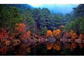 地球,反射,自然,树,秋天,湖,壁纸,图片