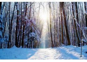 地球,冬天的,森林,雪,艺术的,自然,壁纸,图片