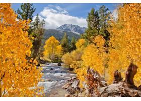 地球,河,秋天,森林,树,叶子,壁纸,图片