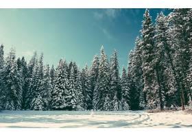 地球,冬天的,自然,森林,壁纸,图片