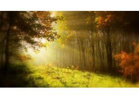 地球,阳光,阳光,秋天,树,草,自然,森林,壁纸,图片