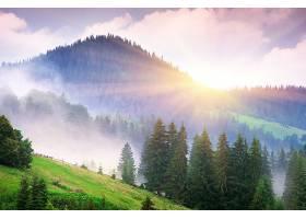 地球,阳光,雾,自然,树,山,壁纸,图片