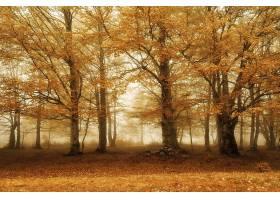 地球,雾,自然,树,叶子,壁纸,图片