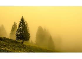 地球,雾,自然,树,壁纸,(3)图片
