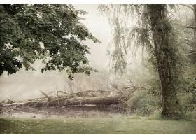 地球,雾,自然,树,壁纸,(4)图片