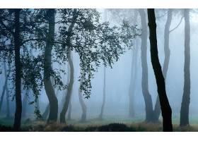 地球,雾,自然,树,壁纸,(6)图片