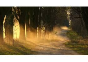 地球,雾,自然,树,泥土,路,壁纸,图片