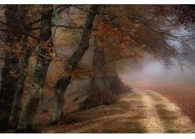 地球,雾,自然,树,泥土,路,秋天,叶子,壁纸,图片