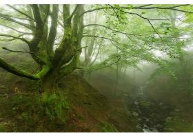 地球,雾,自然,树,溪流,森林,壁纸,图片