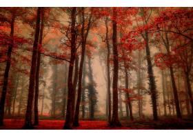 地球,雾,自然,树,秋天,森林,壁纸,(2)图片