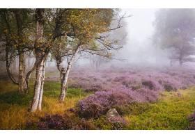 地球,雾,自然,树,花,紫色,花,壁纸,(1)图片