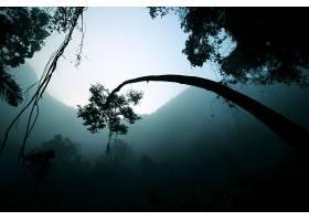 地球,雾,自然,树,轮廓,壁纸,图片