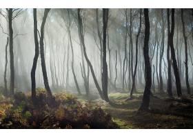 地球,雾,自然,树,阳光,森林,壁纸,图片