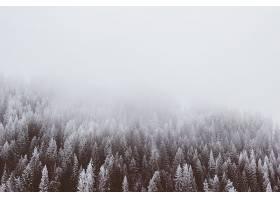 地球,雾,自然,森林,冬天的,壁纸,图片