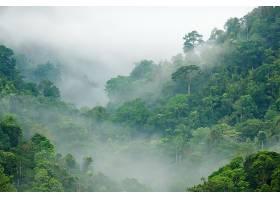 地球,雾,自然,森林,壁纸,(3)图片