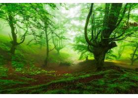 地球,雾,自然,森林,树,温室,壁纸,图片
