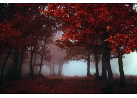 地球,雾,自然,秋天,树,森林,叶子,壁纸,图片